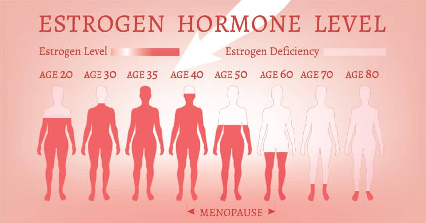 Estrogen-Hormone-Level